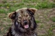 Ищет дом чудо-собачка Джина!