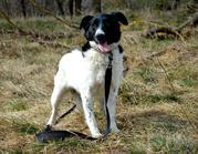 Ищем хорошего хозяина для собачки Аниты!